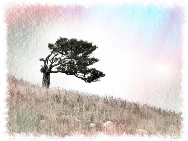 Baum (11)