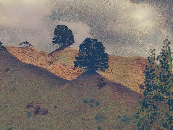 Baum (5)